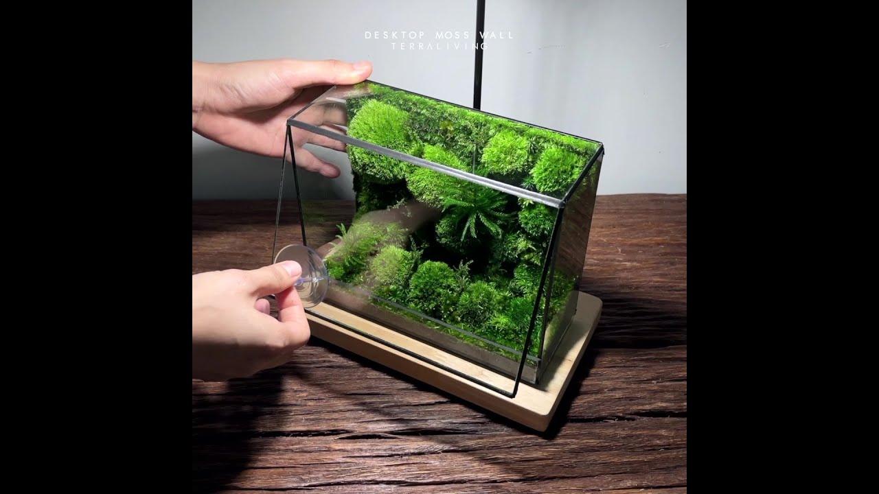 Desktop Moss Wall - The Fluff, Preserved Moss Terrarium by TerraLiving