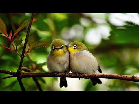 Sweet People - Et Les Oiseaux Chantaient (4K)