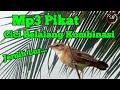 Suara Pikat Burung Cici Belalang Kombinasi Mix Sg Pulot  Mp3 - Mp4 Download