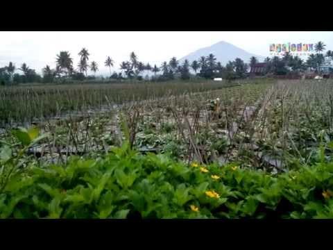 garut-jawa-barat-indonesia
