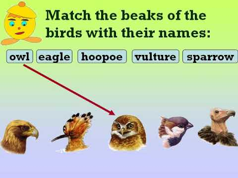 Class 3 Science Birds' beaks, claws etc Questions and Answers