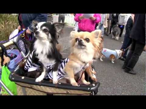Cute Dogs Wearing Cute Clothes in Tokyo