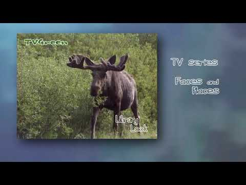 FaunaView: Yellowstone - Moose Adventures