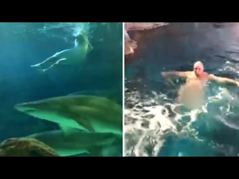 DJ Prostyle - Naked Man Jumps Into Shark Tank at Aquarium