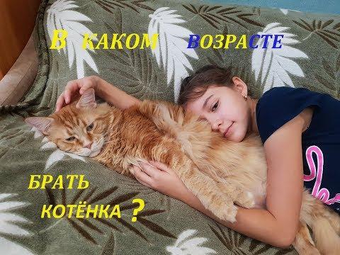 В каком возрасте брать котенка? Находим ответ