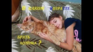 В каком возрасте брать котенка ? Находим ответ