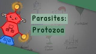 protozoar dex este posibilă vindecarea viermilor fără medicamente