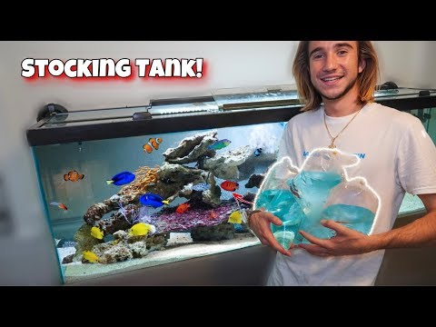 The ULTIMATE Saltwater Tank FISH STOCKING!