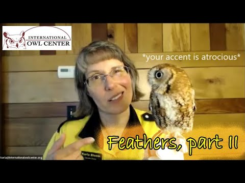 Online Owl Chat: Feathers Part II