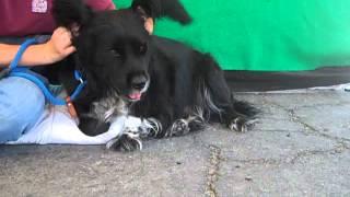 Coqueta A4461241 Rescued!!!
