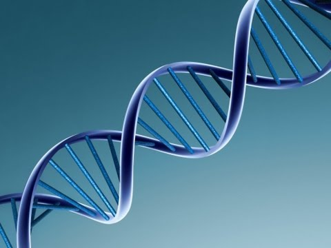 Gene Can Predict Time of Death