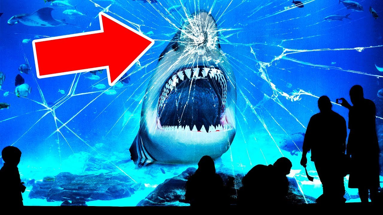 d133d0c8ecf41 Why No Aquarium In the World Has a Great White Shark? - YouTube