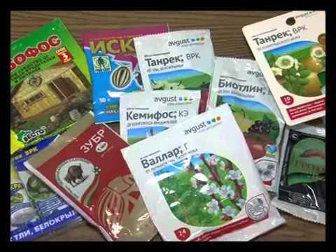 В нашем интернет-магазине вы можете купить саженцы клубники и земляники практически круглый год. Мы предлагаем покупателям 3 вида продукции: в красочной упаковке – охлаждённые растения (рассада