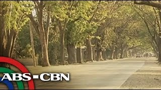 Environmentalists vow to save Pangasinan trees