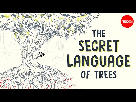 Video image: The secret language of trees - Camille Defrenne and Suzanne Simard