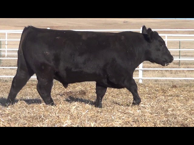 Express Ranches Lot 161