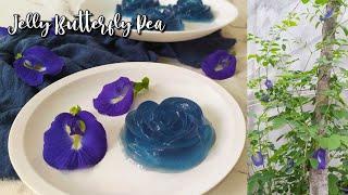 Jelly bunga telang   Hasil kebunku