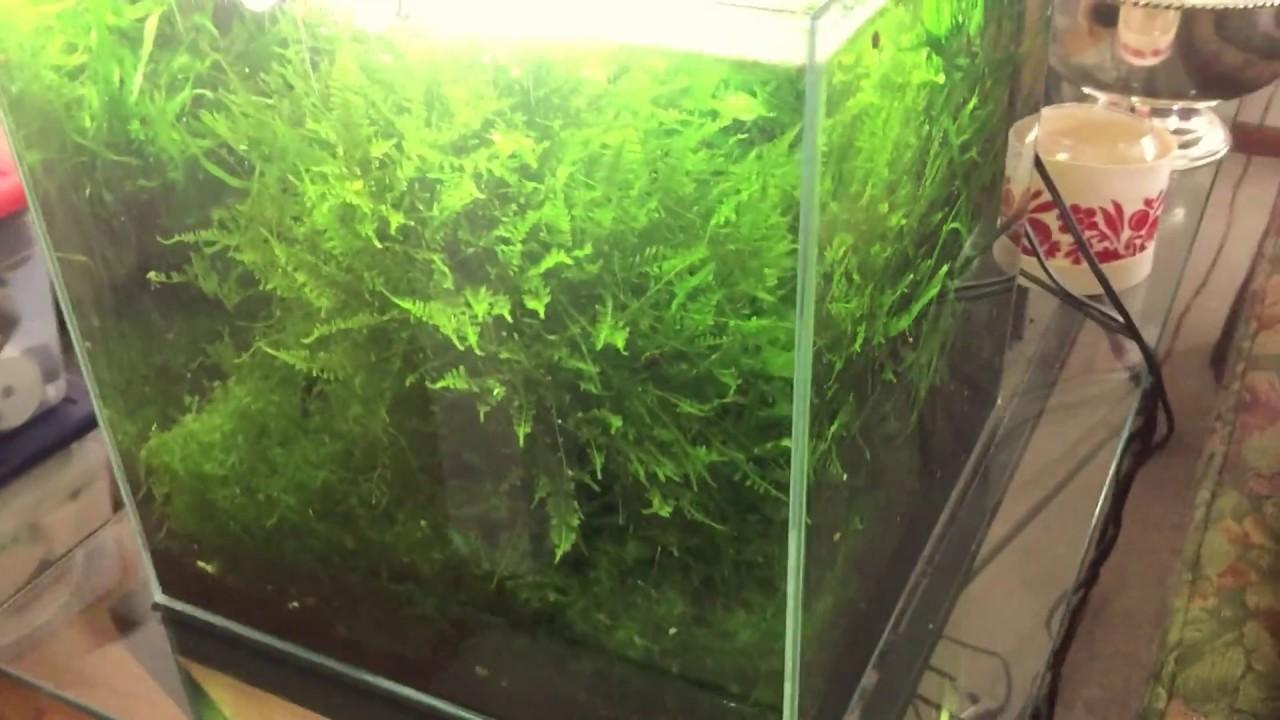 Low maintenance planted aquarium- Part 2: Plants - YouTube