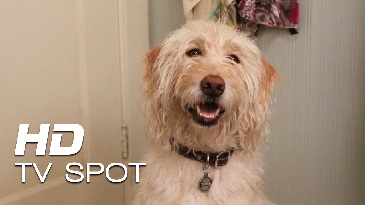 Download Diary of a Wimpy Kid: Dog Days   'Back'   TV Spot