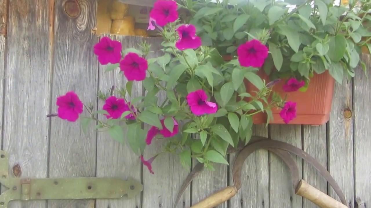Место СИЛЫ у меня в саду!