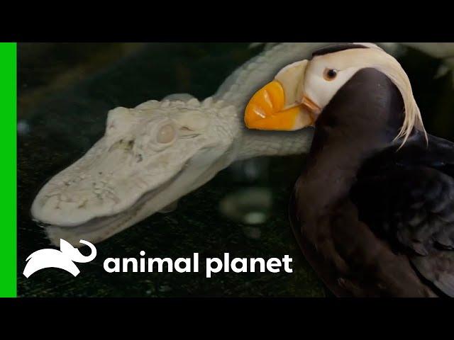 🔴 Meet The Aquarium's Most Amazing Creatures! | The Aquarium