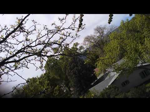 How NOT to inspect a tree with a drone