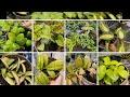 Plant shopping @ Vandermeer Nursery (Hoya, Hoya and more Hoya)