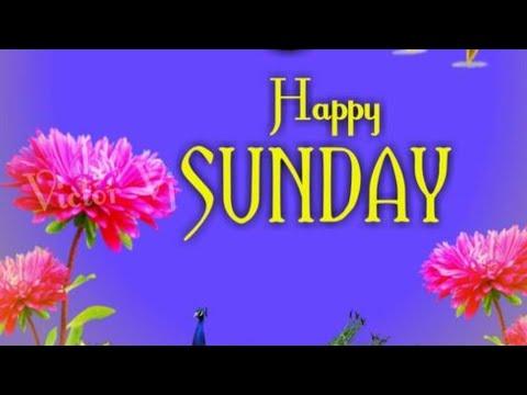 Good Morning Sunday Images, Best Good Morning Images & Beautiful White Flowers Images.