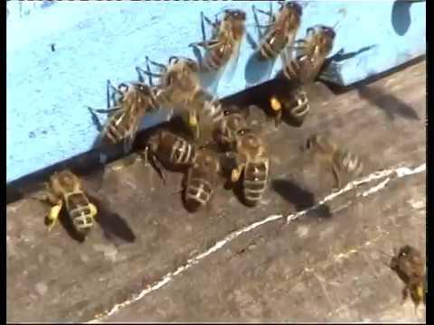 Včelaření - Velká Bíteš