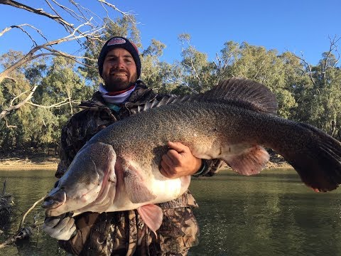 Murray Cod Fishing 20-5-18 104cm