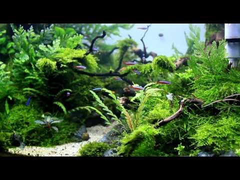"""Aquascape """"naturalman Aquarium Design"""" 2014  Youtube"""
