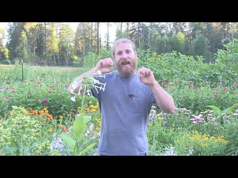 Alchemy and Herbalism Part I: The Science and Spirituality of Herbalism