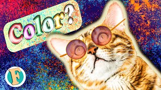 Can cats see color or just black and white? | unveiling the truth about cats' vision