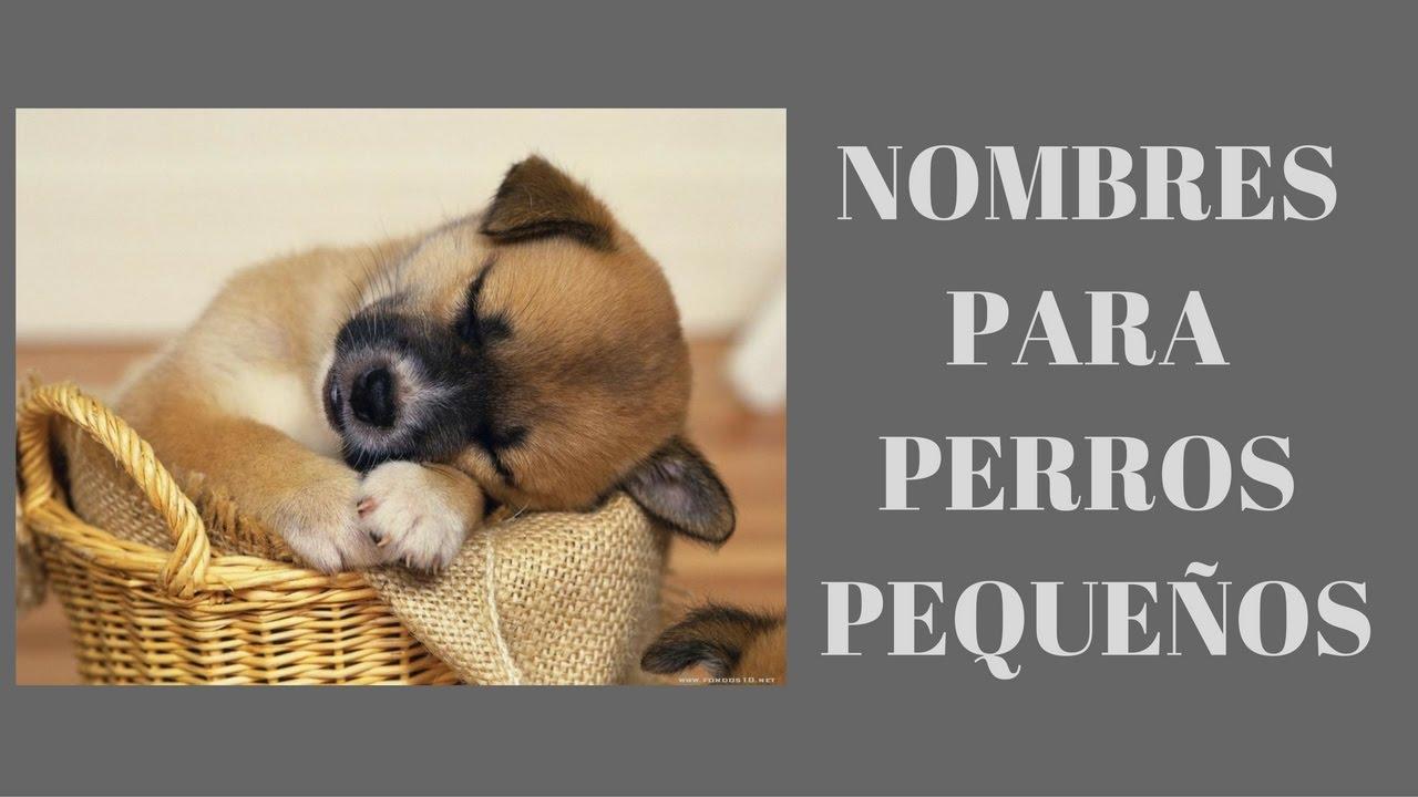 Nombres Para Perros Pequeños Nombres De Perros Pequeños Youtube