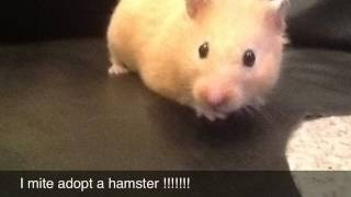 Mite Adopt A Hamster