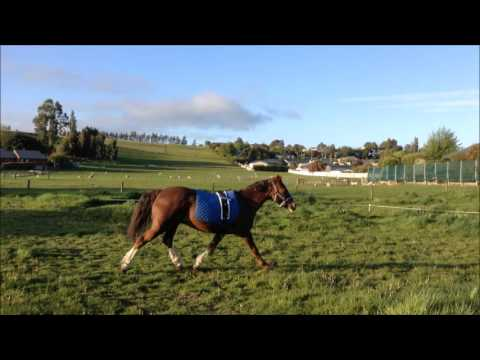 One Call Away {Horses}