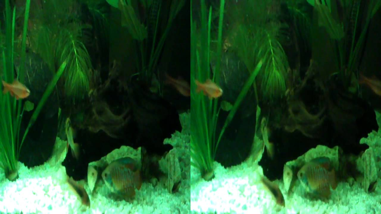 LG OPTIMUS 3D Fish tank video in 3D    feed tropical fish  mp4