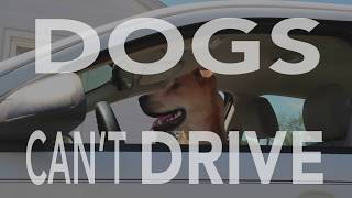 Tampa Connected Vehicles Pilot - Dogs Can