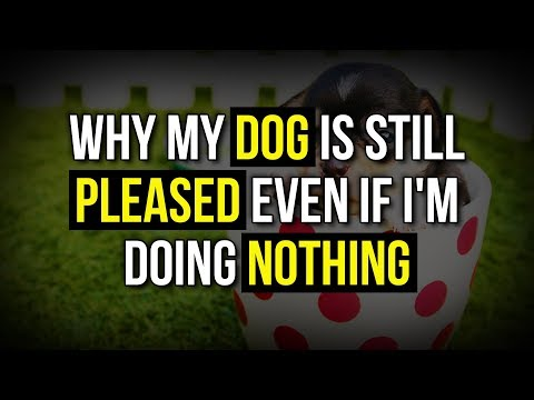 Abraham Hicks 💕 Why My Dog is Still Pleased Even If I'm Doing Nothing