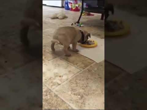 Il cane che scorreggia mentre mangia youtube - Cane che mangia a tavola ...
