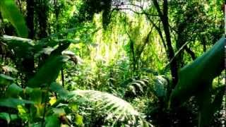 puerto rico the relaxing rainforest sound of el yunque 8 minutes in hd