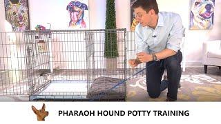 Pharaoh Hound Potty Training from WorldFamous Dog Trainer Zak George  Train a Pharaoh Hound Puppy