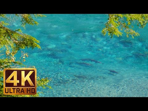 4K Relaxing Video - Crystal Clear River - 3 Hours of Calming Birdsong & Sound of Water