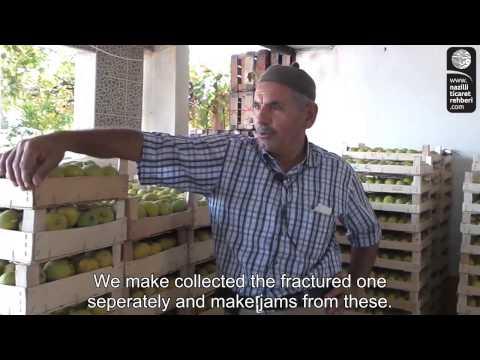 kasım karadana  taze incir ticareti  feslek köyübuharkent