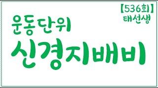 【536회】 속근 운동단위 운동신경지배비 운동단위수 기…