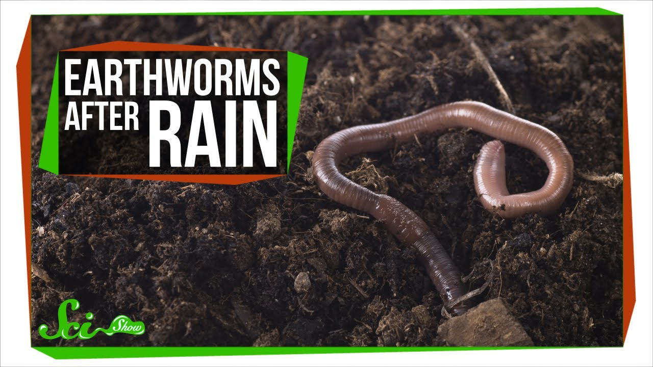 Why Do Earthworms Come Out After It Rains? - YouTube