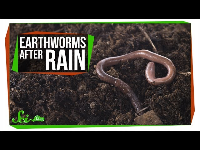 Why Do Earthworms Come Out After It Rains?