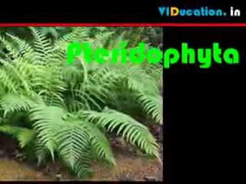 CBSE 9 sci chap7 DIVERSITY IN LIVING ORGANISMS 1