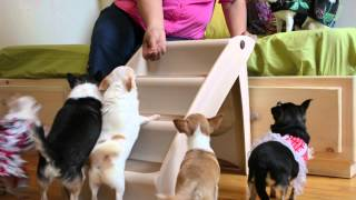 Pupstep Plus Xl Foldable Pet Staircase