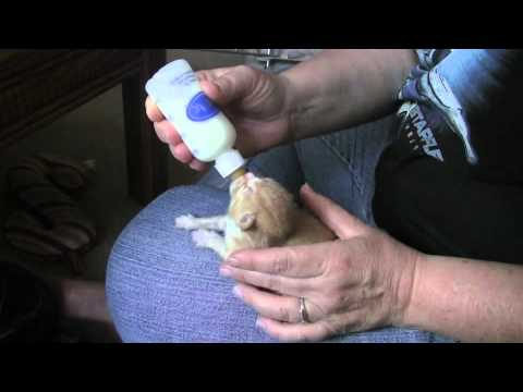 How to Take Care of 5 Day Old Kittens